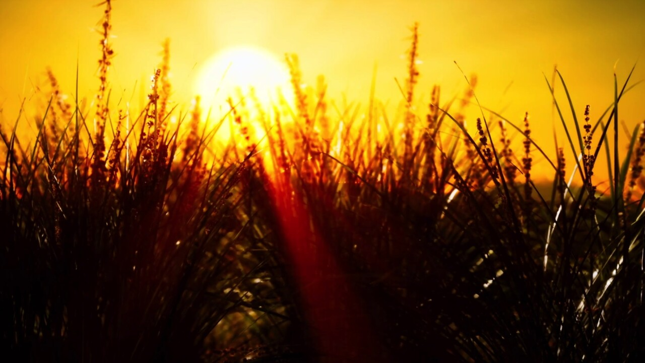 Climate professionals urge state action amid heat, drought