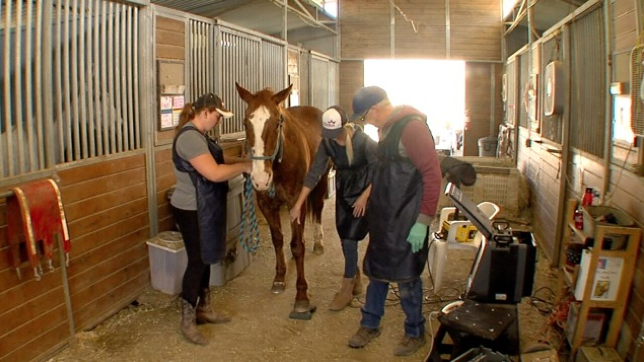 HiCaliber Horse Rescue receives tax report warning from Attorney General's Office