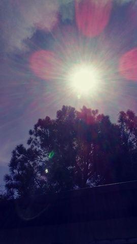 Eclipse Photos of Southwest Florida
