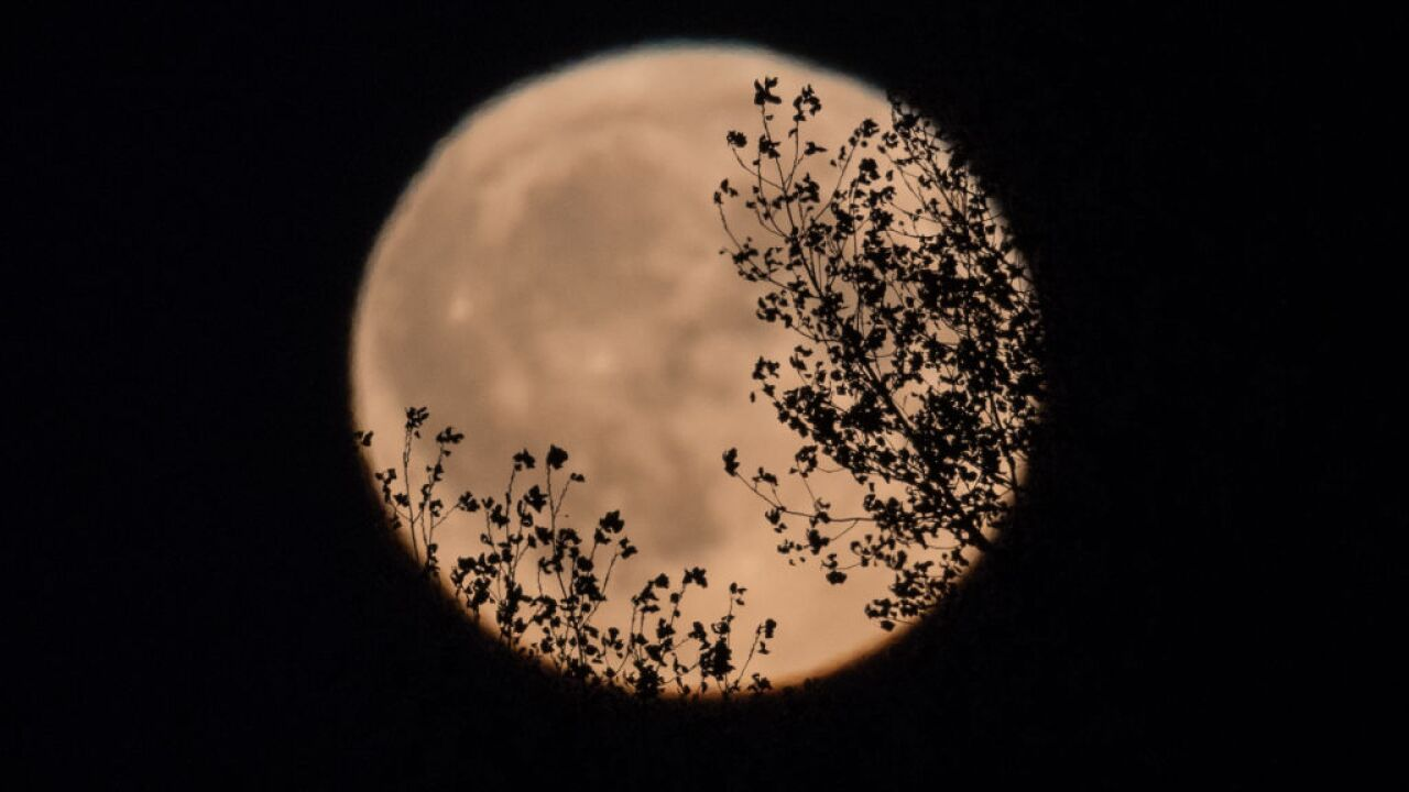 Strawberry Moon 2019: Best times to watch and special viewing bonus