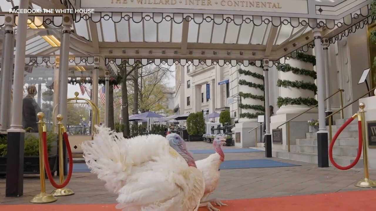 Trump to hold turkey pardoning ceremony at White House amid pandemic, election challenges