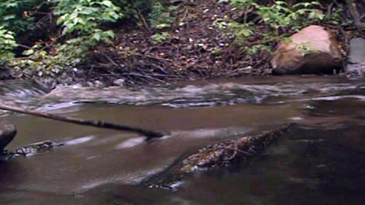 Residents file lawsuit against Chevron over 2010 oil spills