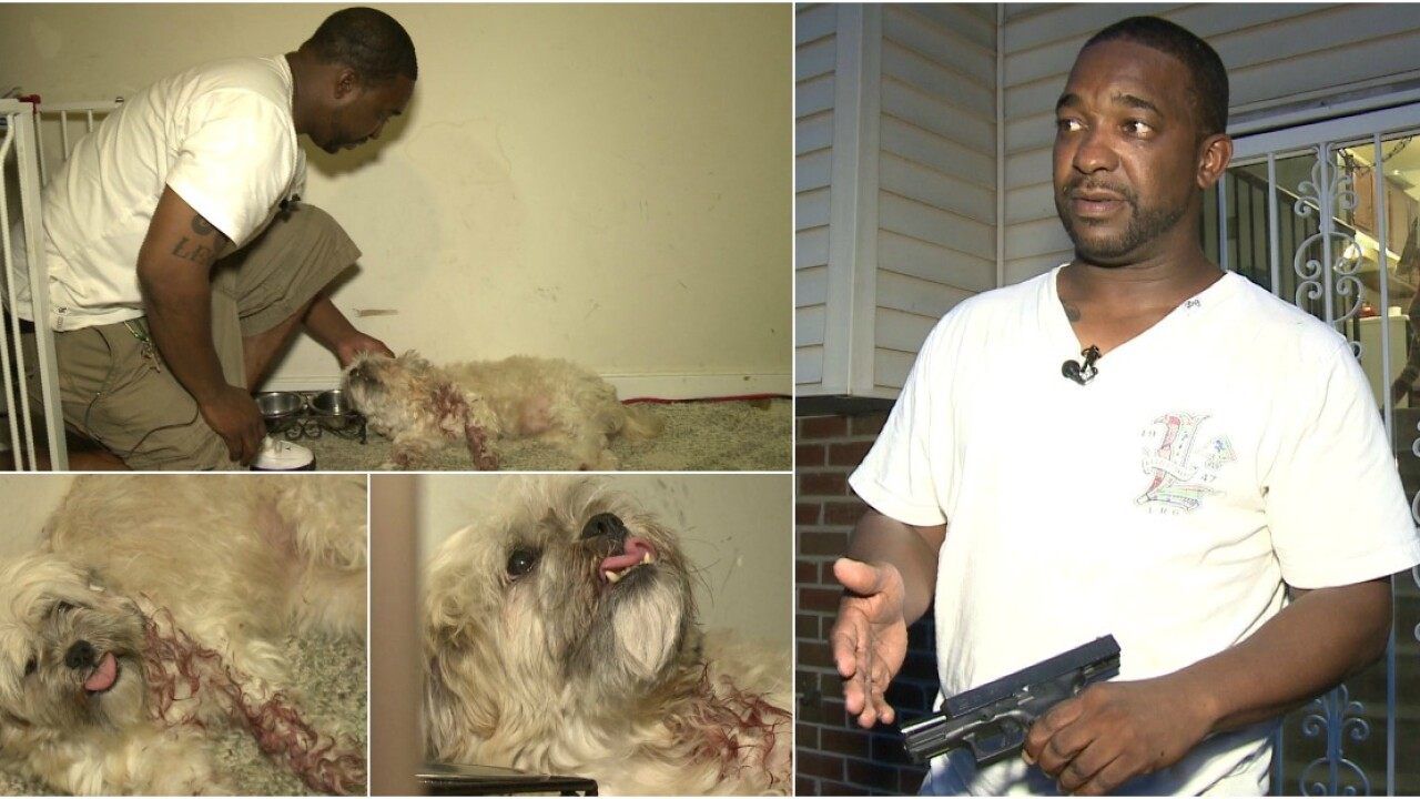 'Do it', owner says before man shoots dog 3 times to save 'Foxie'