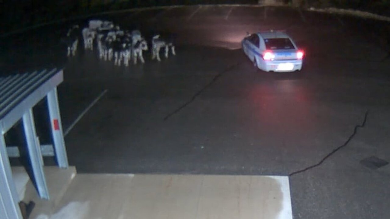 A herd of spotted cows made a late-night visit to Spotted Cow brewery