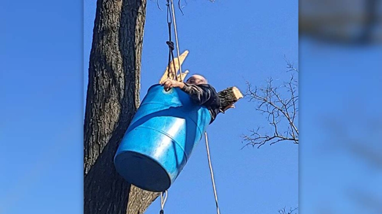 man stuck in tree 3.jpg