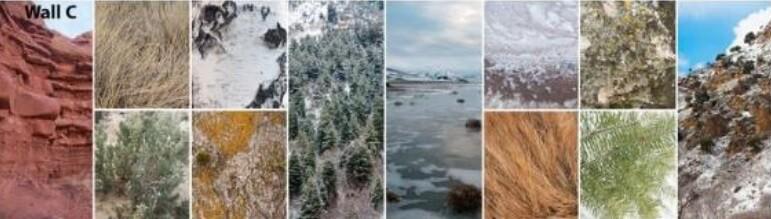 Desert, Forest, Wetland, Alpine by Kelly Baisley, Utah.jpg