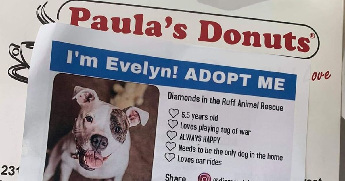 Animal rescue partners with Paula's Donuts, adoptable animals on donut boxes