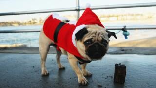 Christmas Celebrations At Bondi Beach