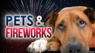 The fireworks are coming again: Make sure you take care of your pets