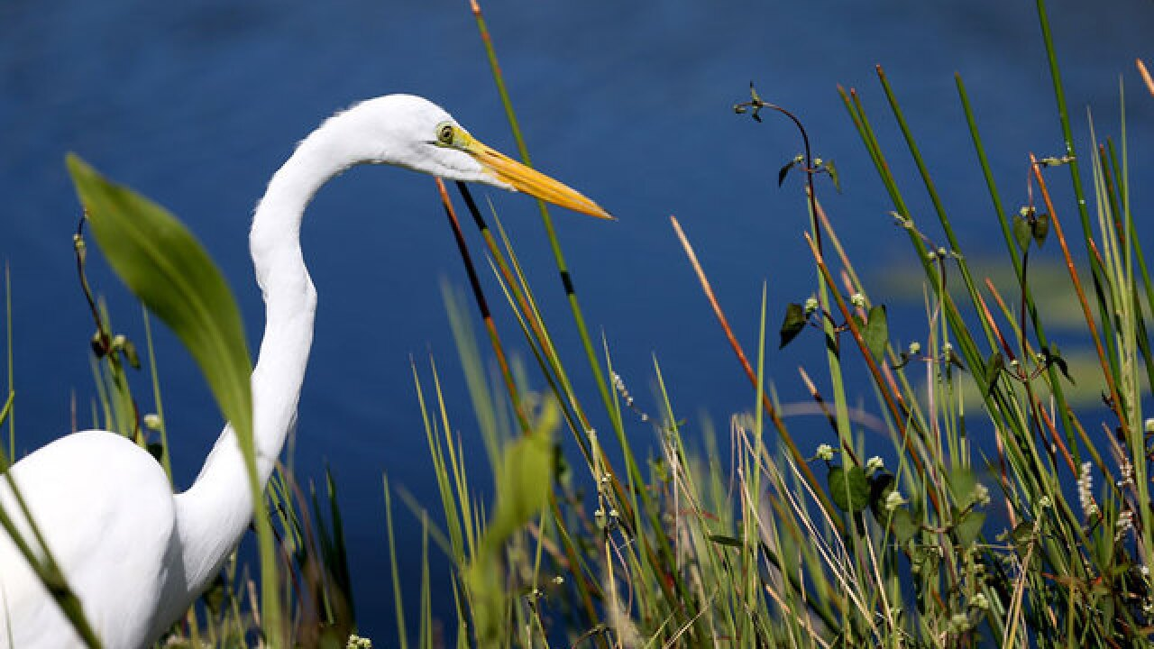 "Scientists: Everglades ""critically endangered"""
