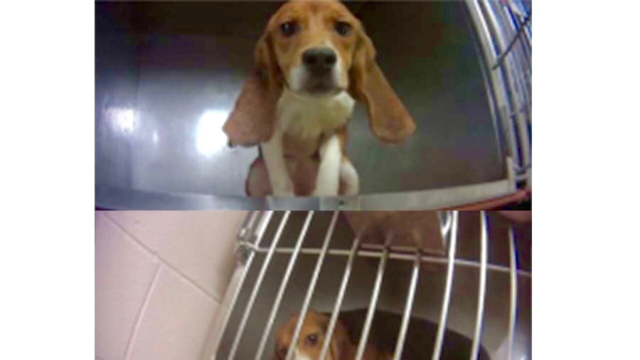 Beagles freed from pesticide testing arrive at Michigan Humane Society