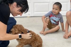 Las Vegas boy adopts a puppy 'Nemo' who shares his 'small ear'