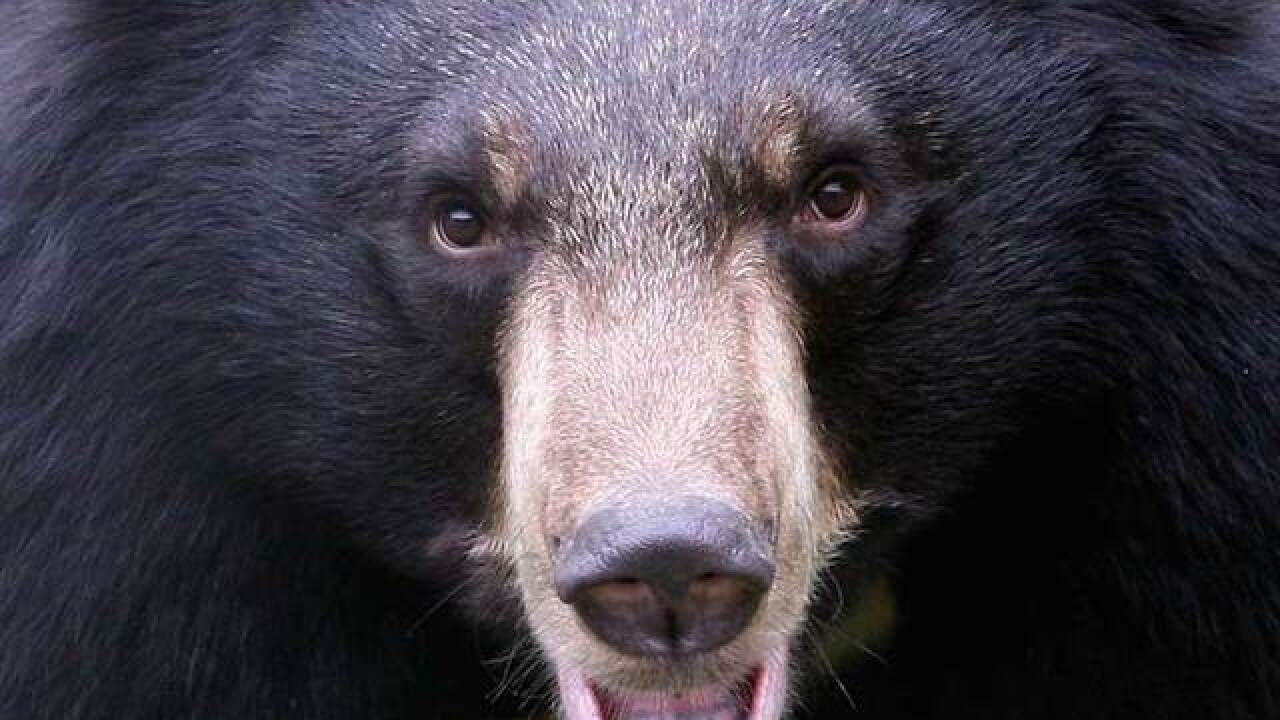 Officials: Aspen homeowner legally shot black bear dead