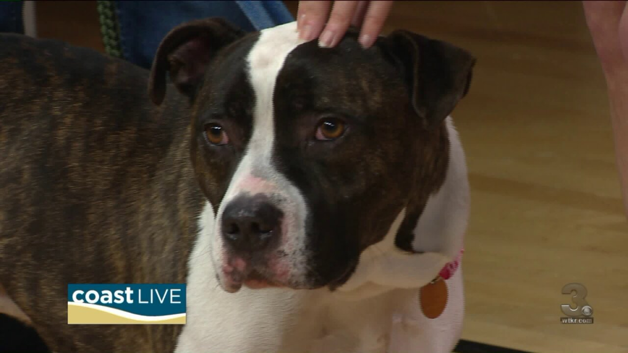 Meet your future friend as we mark Homeless Animal Week on Coast Live