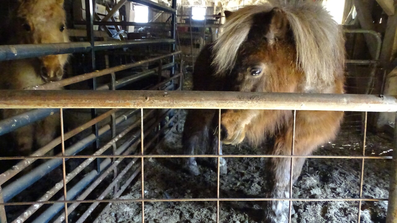 Animals rescued from N.E. Ohio farm