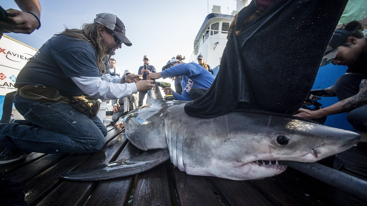 Ocean-based research team on a mission to save the Great White Shark