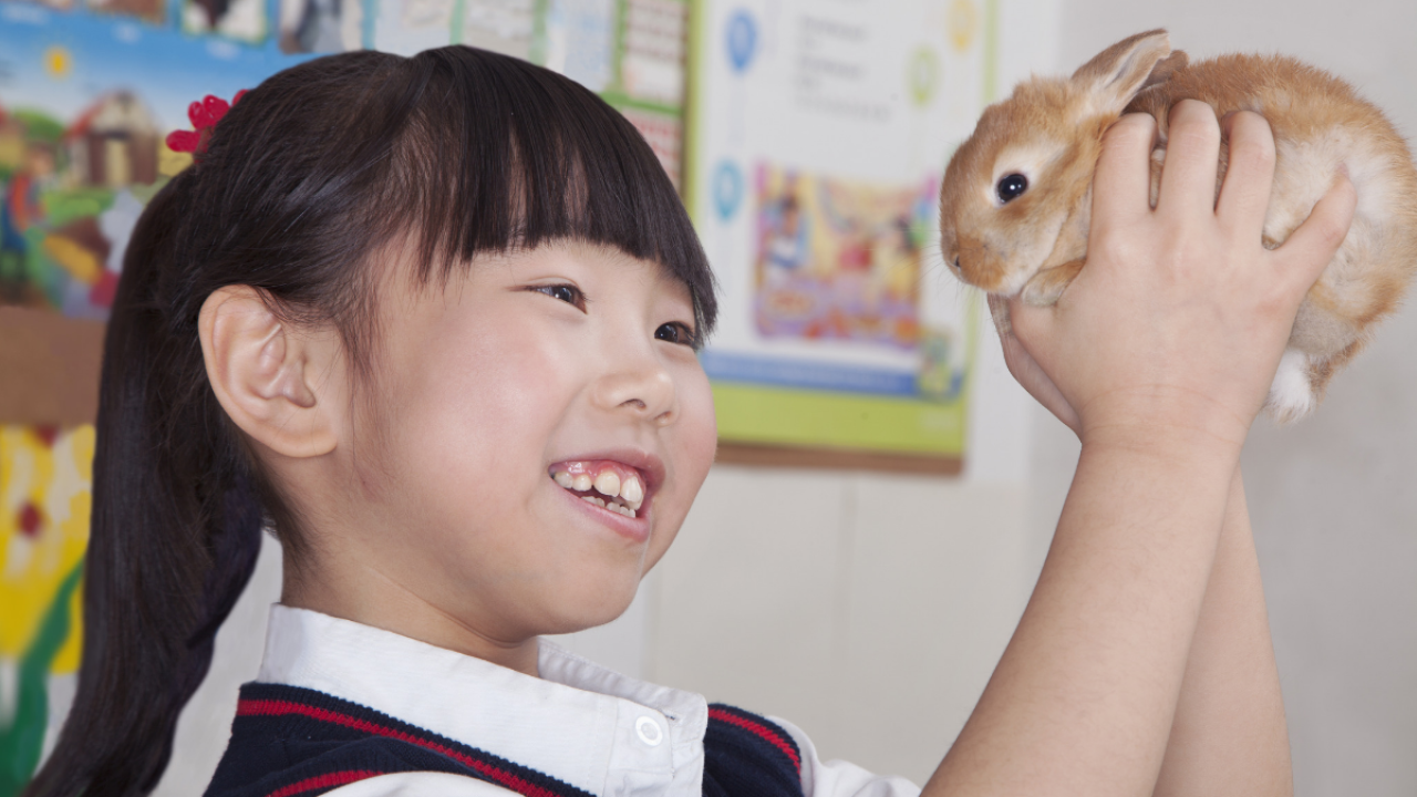This grant helps teachers add pets to their classroom for free