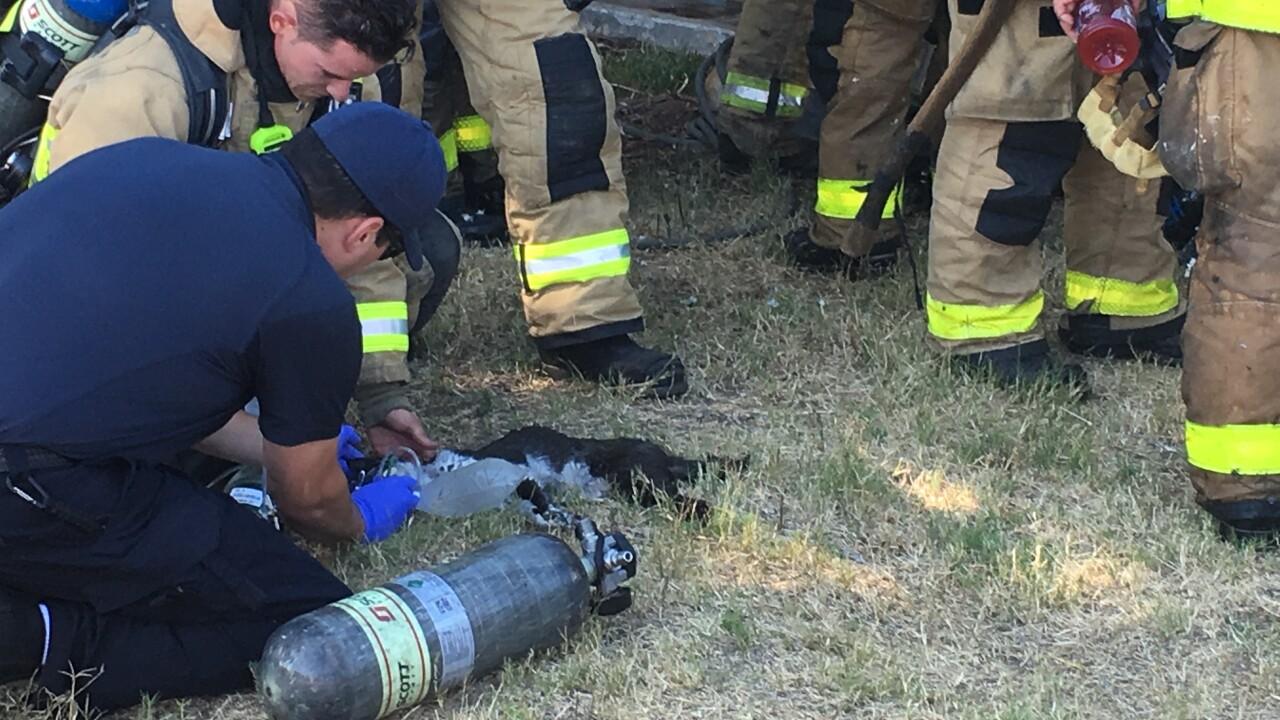 lemon grove house fire cat resuscitation