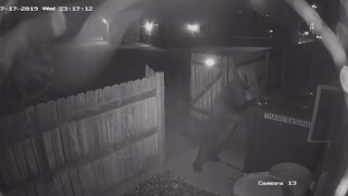 Security video shows bear trying to take a bear-resistant dumpster