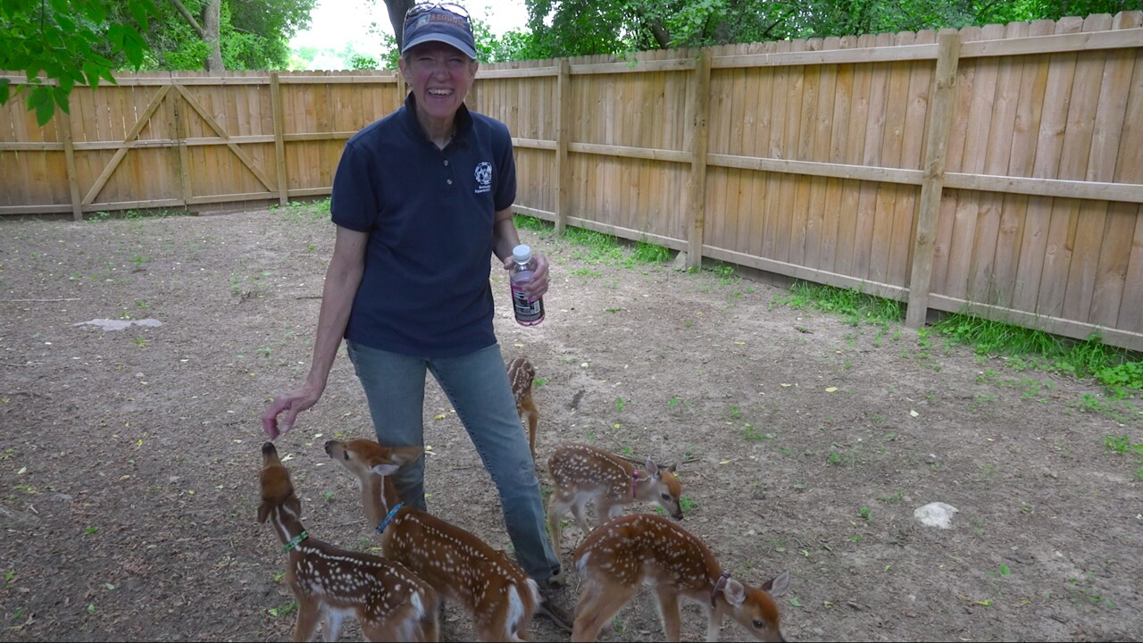 Cheryl Connell-Marsh at her fawn enclosure