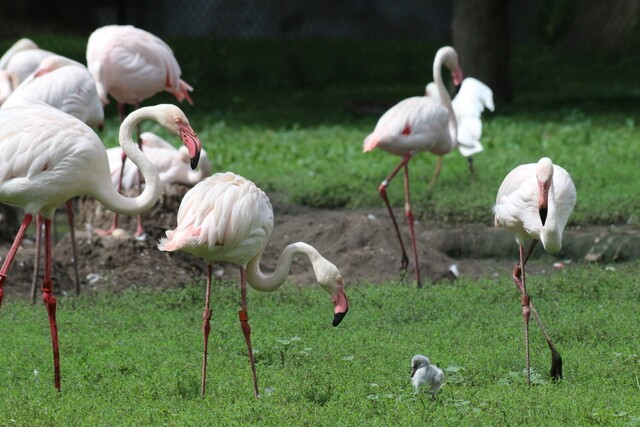 GALLERY: Five baby flamingos hatch at Detroit Zoo