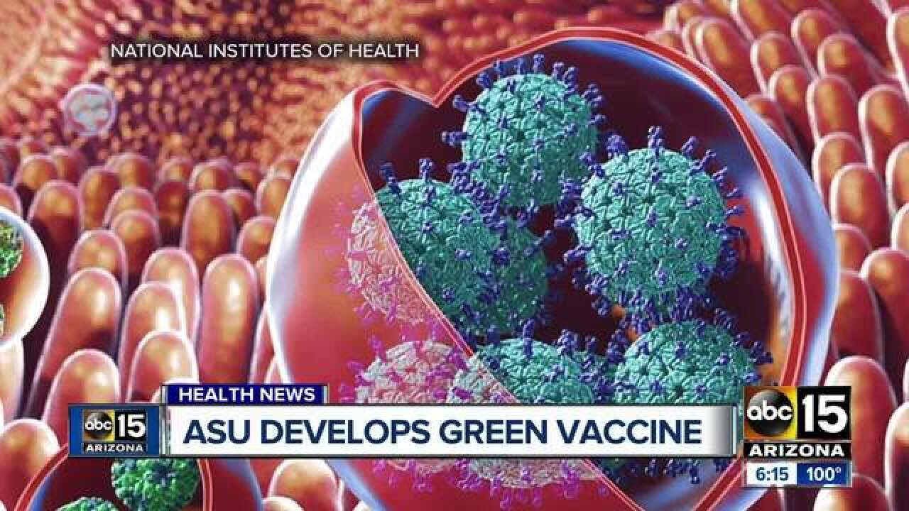 A norovirus vaccine has been discovered with help from tobacco plants and Arizona State researchers