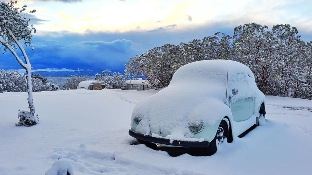 bug in snow.jpg