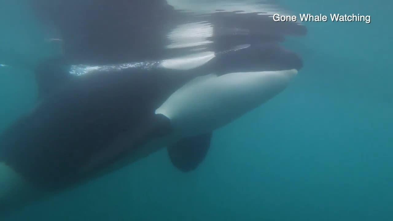Gone Whale Watching (1).jpeg