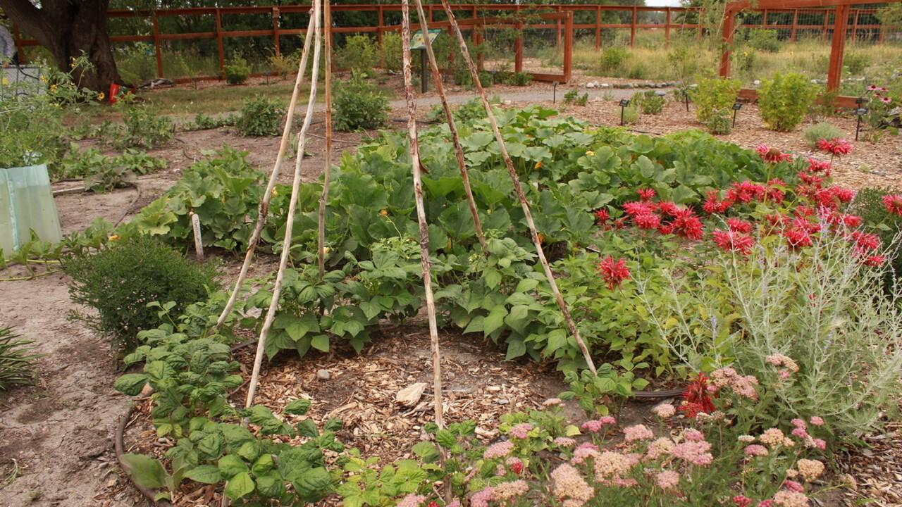 ancestral garden 6.jpeg