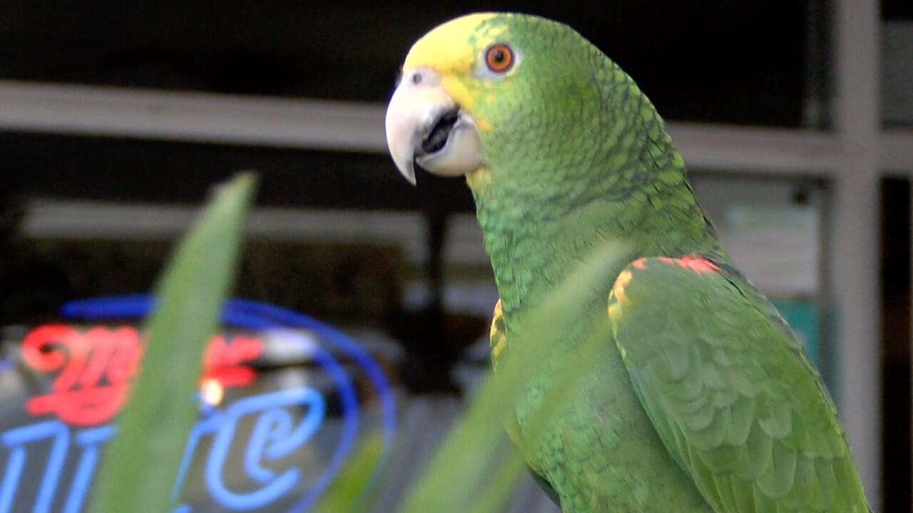 wptv-cafe-frankies-parrot.jpg