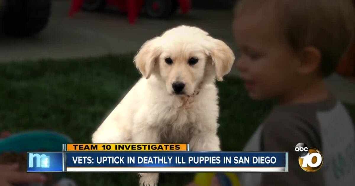 Craigslist San Diego Pets - Gardinen Ideen