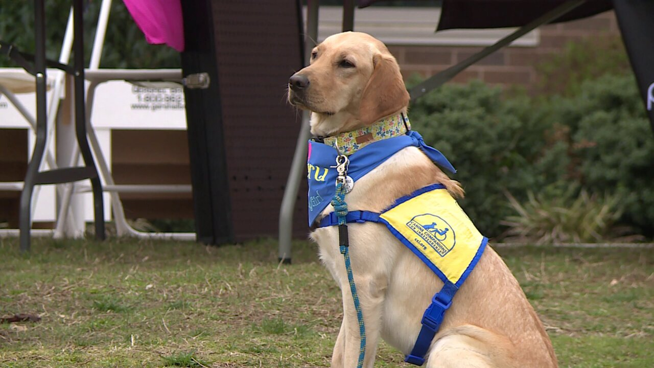'Give a Dog a Job 5K' raises money for CanineCompanions