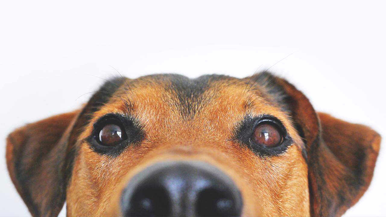 Generic-dog-PEXELS.png