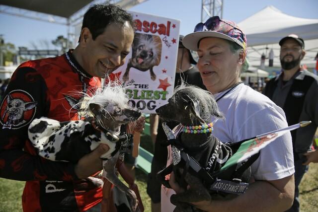 Photos: World's Ugliest Dog Contest 2017