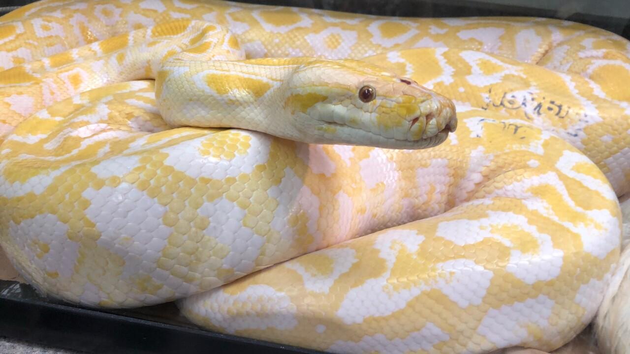 Python_b.jpg