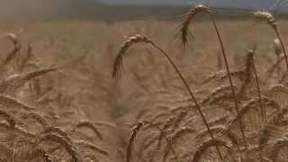 Montana Ag Network: Some Montana farmers disappointed in Trump's proposed cuts to farm programs