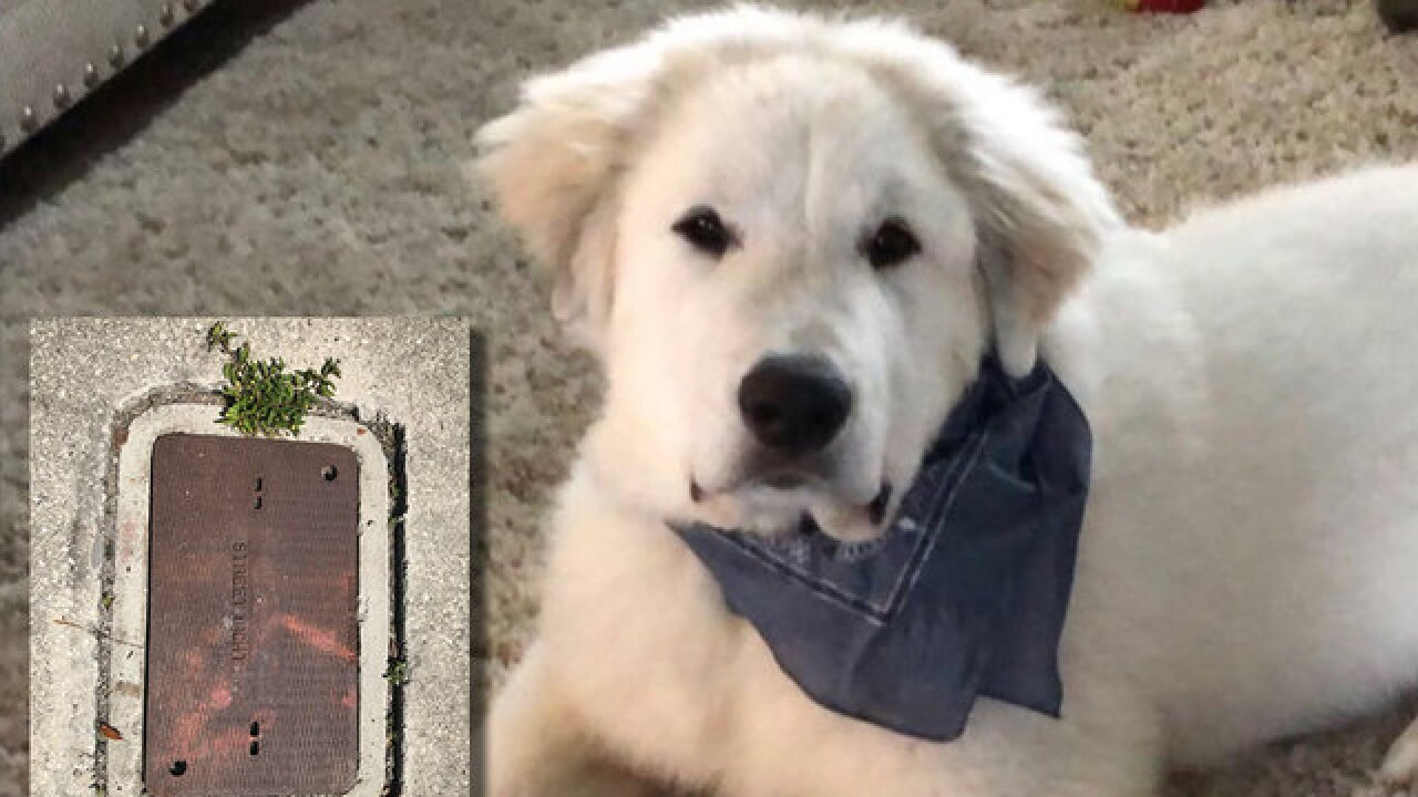 Dog dies after being electrocuted by utility box