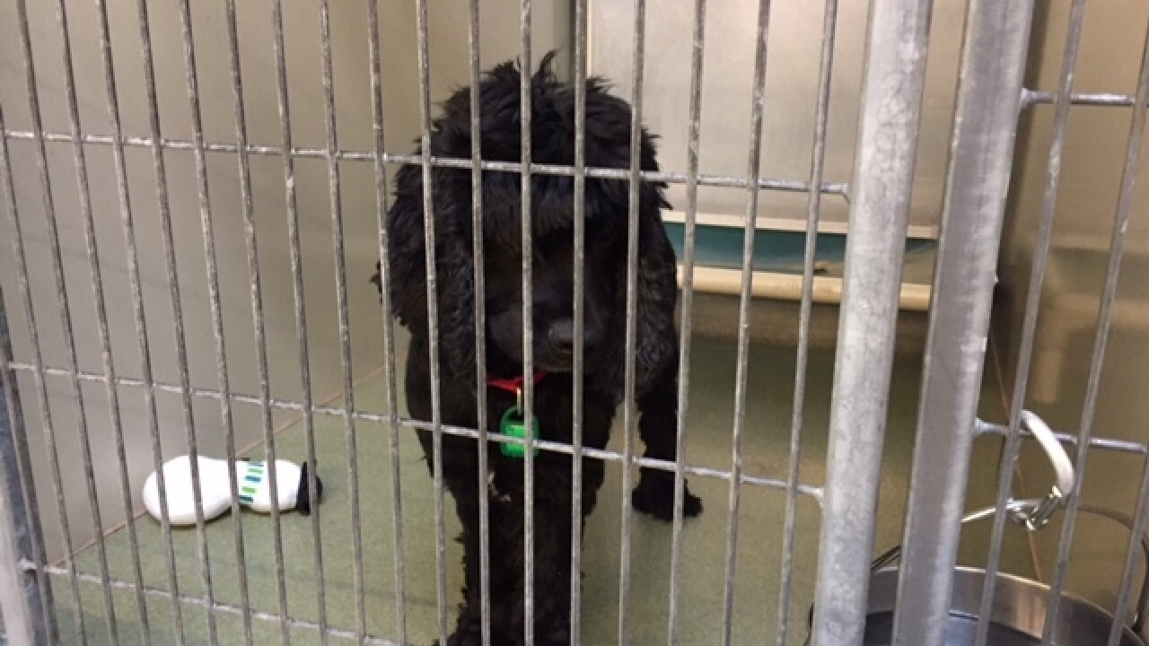 Displaced pets from Florida arrive at CLE APL
