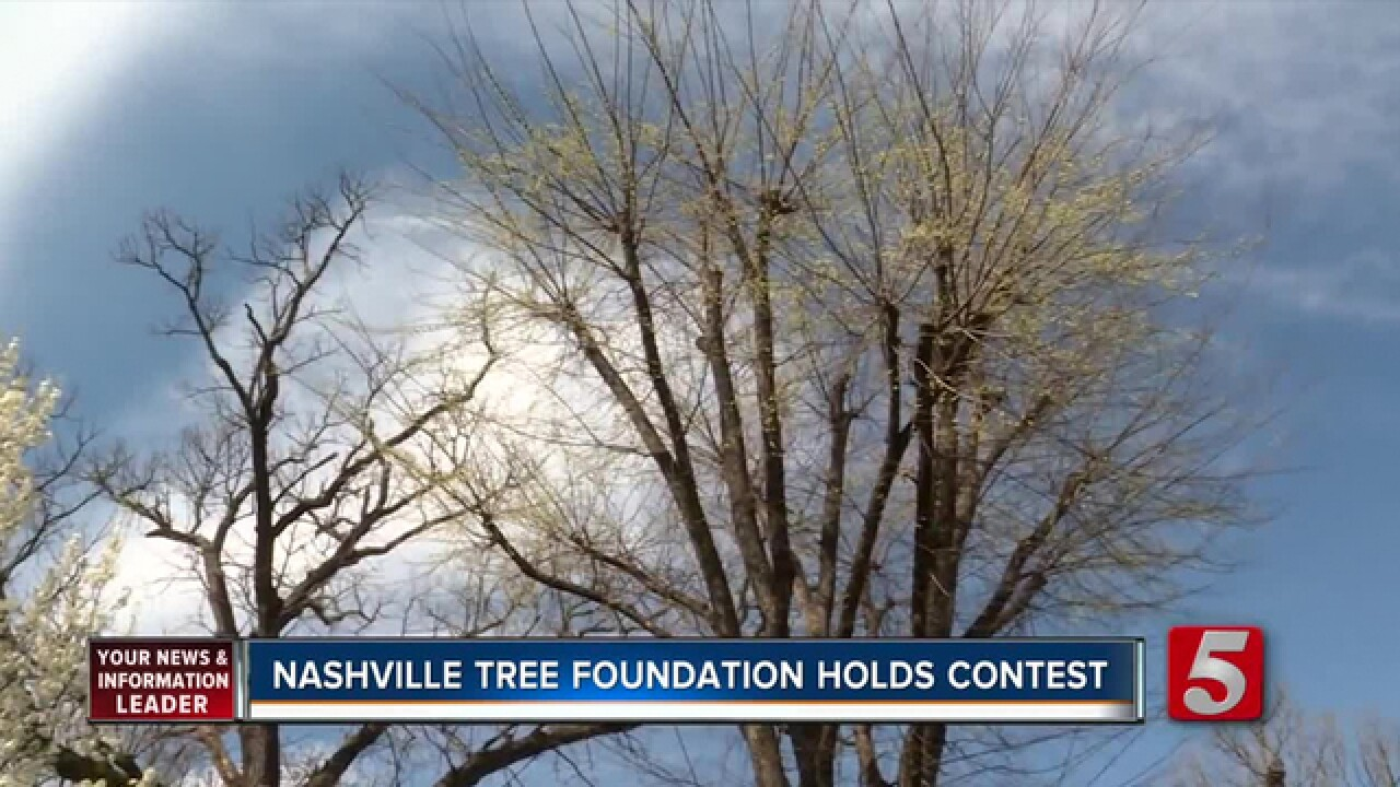 'Big Old Tree Contest' Looking For New Tree Champions