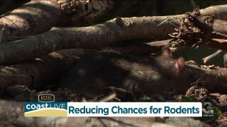 How to reduce the chances for rodents
