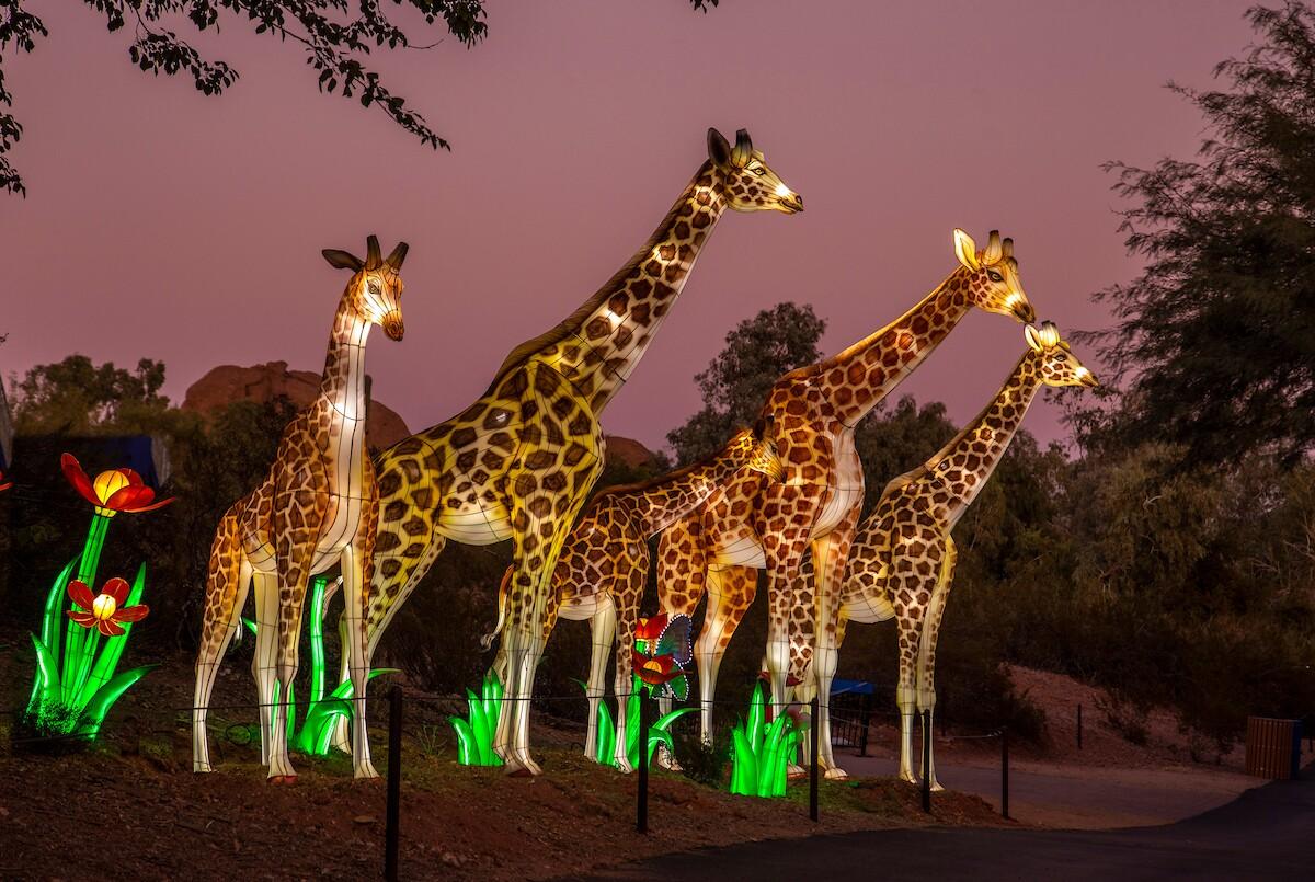 Phoenix Zoo Lights Glow Wild 2019
