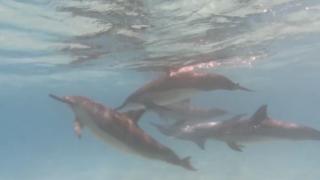photo-by-wendi-lane-dolphins-sarasota1.png