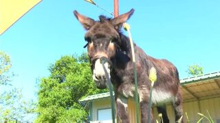 Central Coast Living: Volunteer at donkey sanctuary in Arroyo Grande