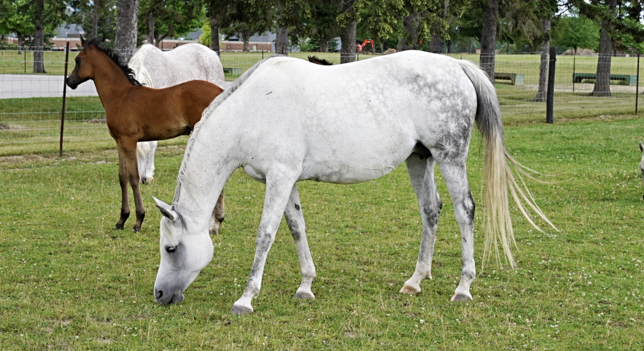 MSU Horse Teaching and Research Center