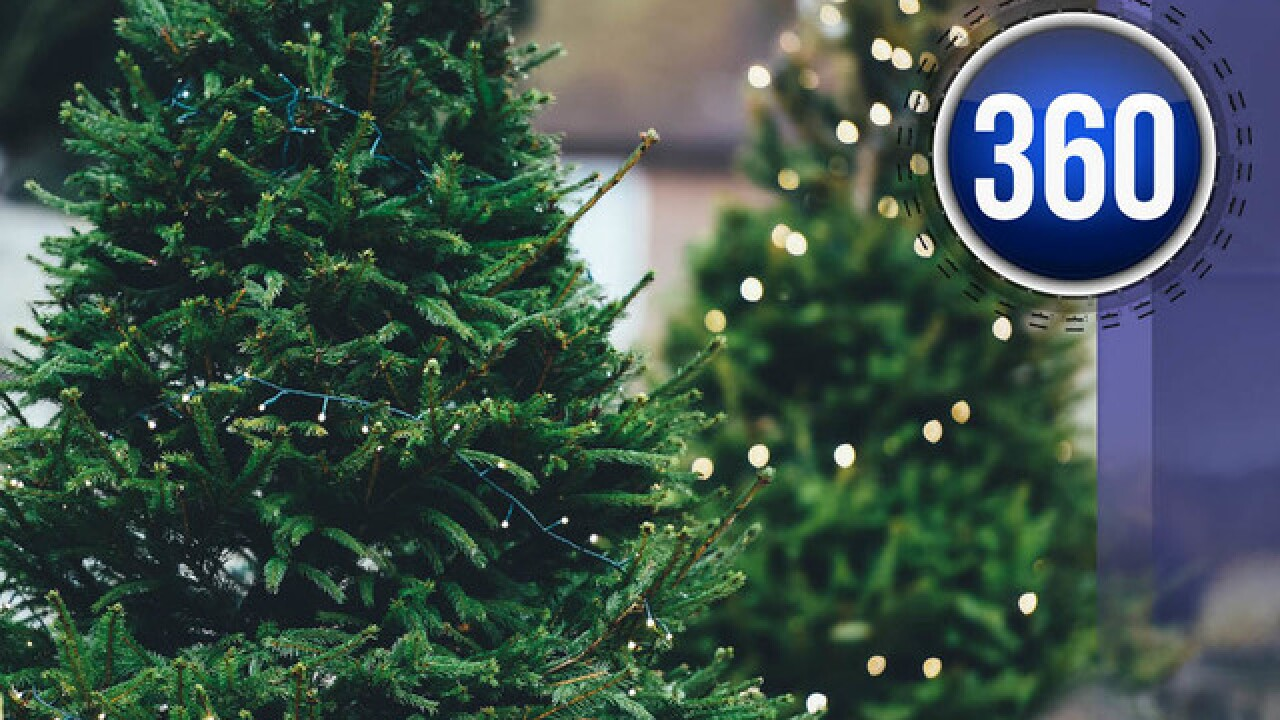 Christmas tree season: What are the pros and cons of real and fake trees?