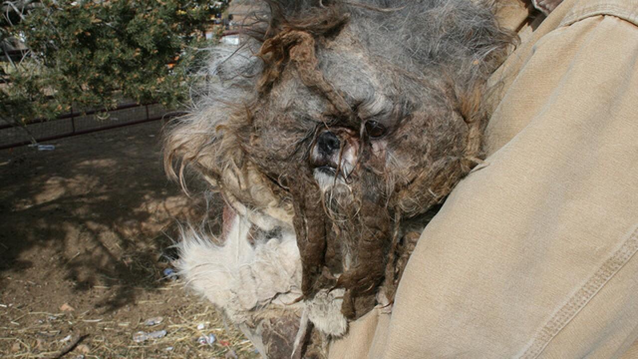 More than 100 animals seized in La Plata County