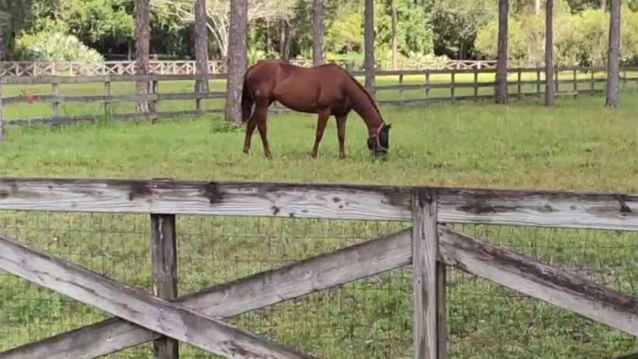 wptv-horse-.jpg