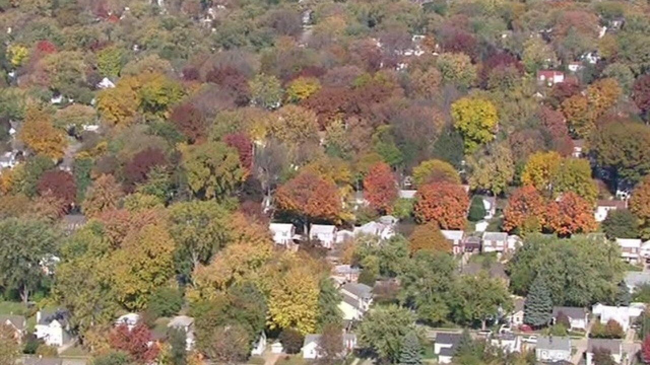 VOTE: Best places to see fall colors in metro Detroit