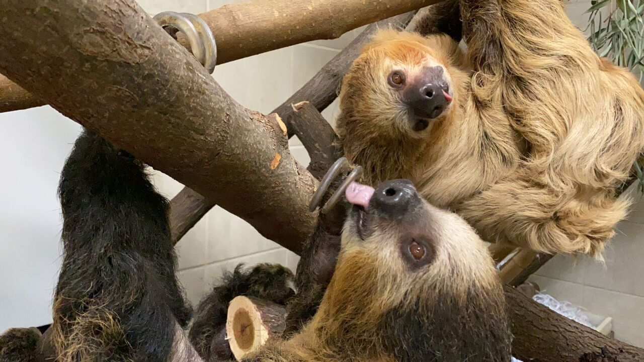 Sloth3.jpeg