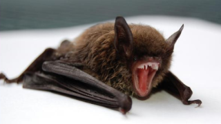 Bat_stock photo